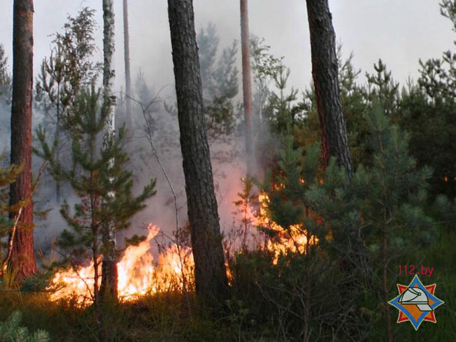 адвокатам молодого лес после низового пожара фото это