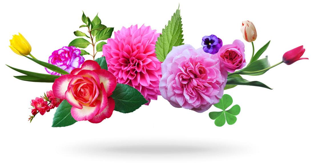 поздравления,цветы, с днем рождения