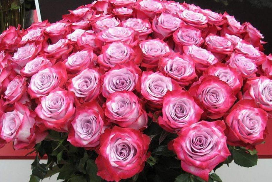 цветы,розы