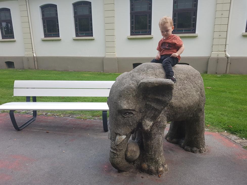 слон,ребенок