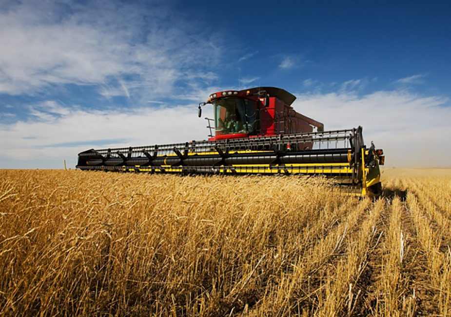 Производство сельхозпродукции