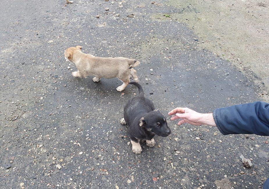 Милые щенки ищут хозяев