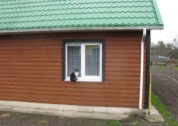 Кот у Мастах