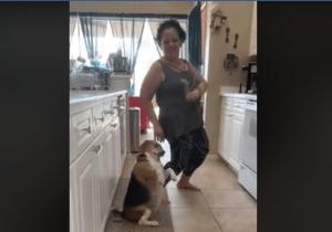 танцующий пес