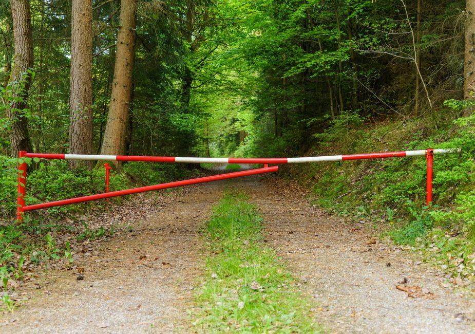 В Слонимском районе введён запрет на посещение лесов