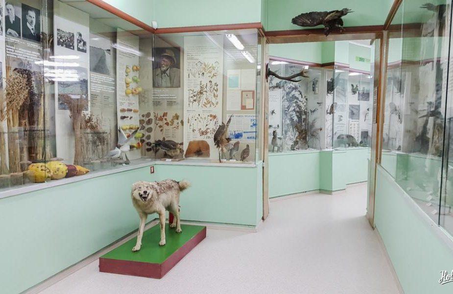 слонимски краязнащчы музей
