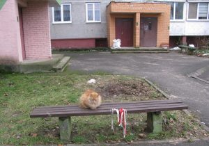 Кот, у Мастах