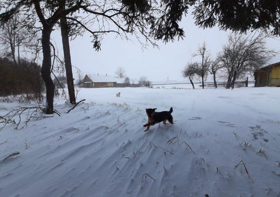Сабакі на снезе