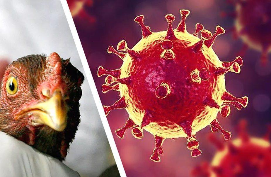Уничтожено около 6 млн кур. В Японии произошла самая масштабная в истории страны вспышка птичьего гриппа