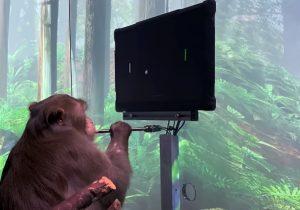 обезьяна с чипом