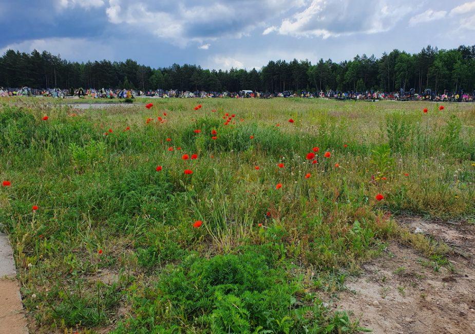 На Чепелевском кладбище цветут маки. Фотофакт
