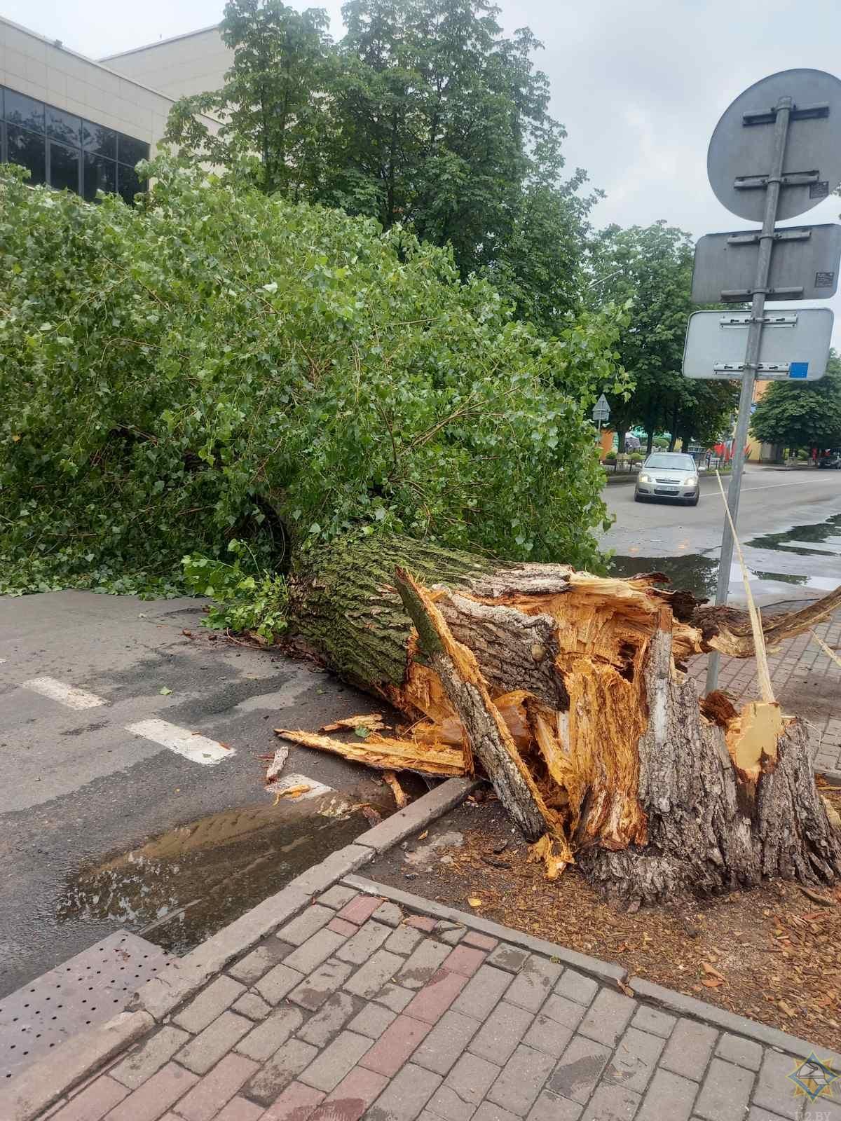 дерево упало