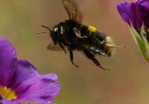 Как обезопасить себя от укусов насекомых и что делать, если укусила пчела или шмель?