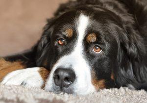 Советы для тех, кто решил завести собаку