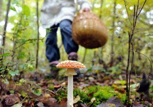 На Гродненщине четырехлетний ребенок отравился грибами