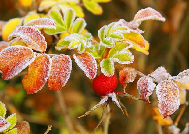 5 сентября в Беларуси столбик термометра может упасть до минус 3 градусов