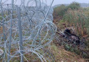 гибель лося на границе